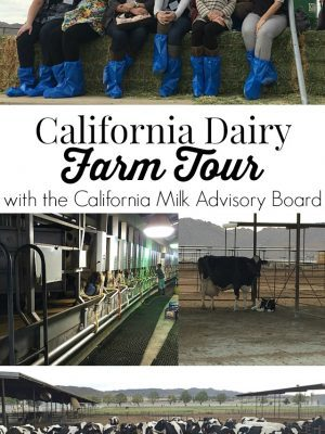 Learn how Thrifty Ice Cream is made in their factory and how milk is farmed from cows on a dairy farm in California! #CAmilk
